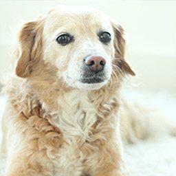 Daisy Dog